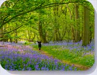 Coasters and placemats with photo of Buckenham bluebell woods Norfolk