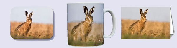 Brown hare photo on coffee / tea mug