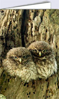 Baby owl card with two little owl owlets