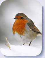 Robin photo on coasters and fridge magnets