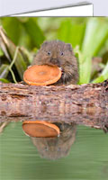 Baby water vole greeting card