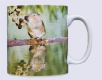 Mug with photo of a water vole picking a blackberry